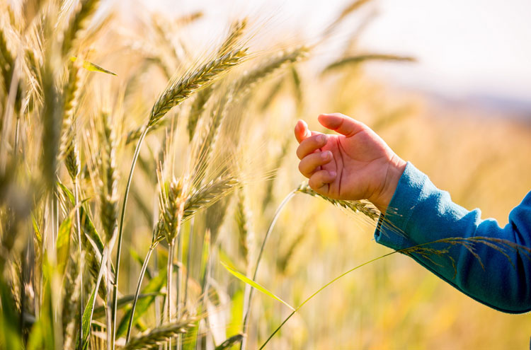 picture of wheat and tares - why did Jesus teach in parables