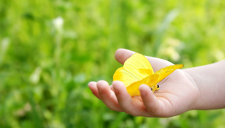Child's hand holding butterfly - Only the gentle and merciful will go to Heaven