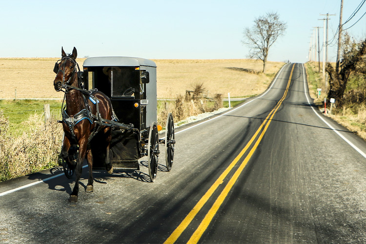 Picture of Amish buggy